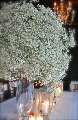 baby's breath beauty